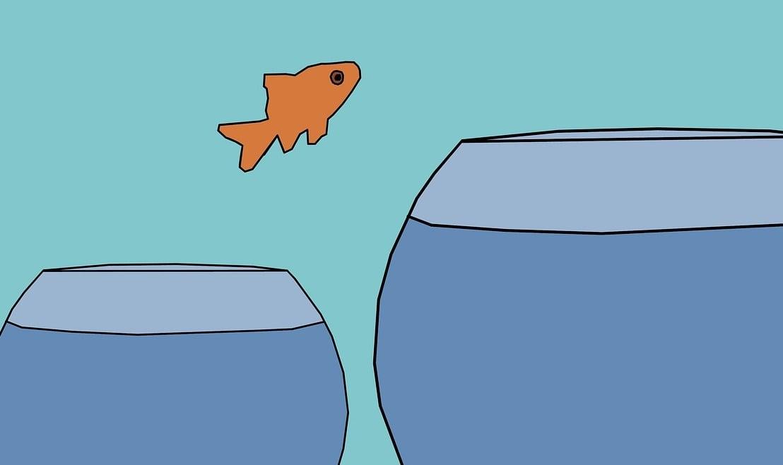 quit your job fish jumping into bigger fishbowl